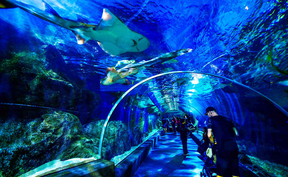 The Sealife Bangkok Ocean World